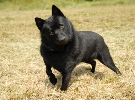 little dog photo
