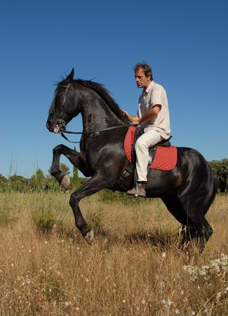 rearing: beautiful black stallion with man in a field