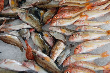 daurade: red mediterranean fishes on ice in a market in corsica Stock Photo
