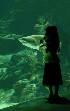 little girl in front of a big tank with shark photo