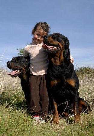 perro asustado: ni�a y dos de raza peligrosa rottweiler  Foto de archivo