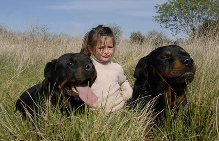 little girl and two dangerous purebred rottweiler photo