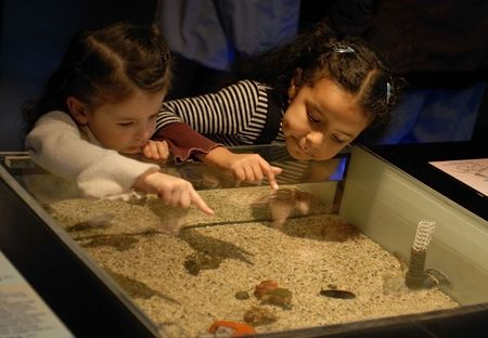 museums: two little girls looking an aquarium in a museum Stock Photo