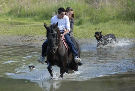 riding lovers on a black stallion in a river with two dogs Stock Photo