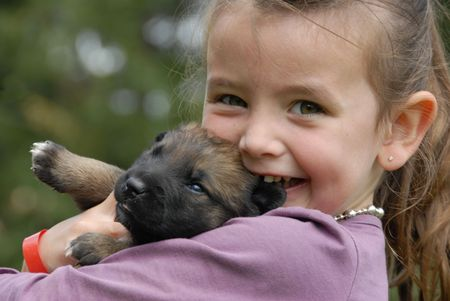 little girl and her very young puppy purebred belgian shepherd malinois photo
