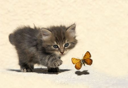 cat walk: very young kitten hunting a butterfly Stock Photo