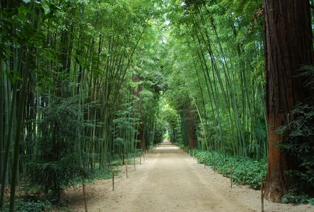 roussillon: Asian Bamboo forest in a park in Anduze, Languedoc Roussillon, France