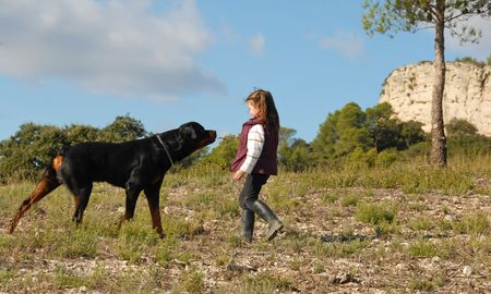 little girl playing with her friend purebred rottweiler Stock Photo