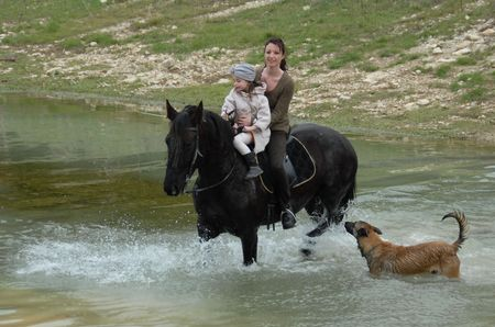belgian horse: riding mother, daughter and belgian shepherd in a river Stock Photo