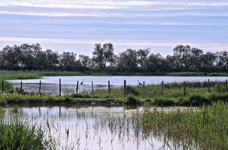 wetland with two herons in the morning Stock Photo