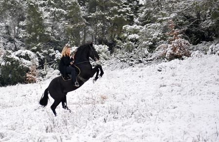 portrait of a rearing black stallion in the snow photo