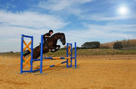 young girl and her black horse in a training of jumping photo