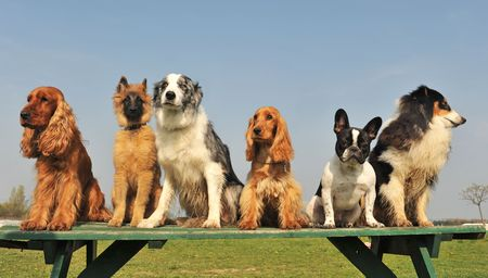 little dogs and puppies sitting on a table in a day of spring photo