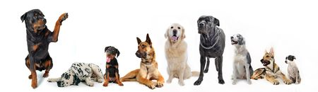 cute  rottweiler say hello with his paw to a group of dog Stock Photo