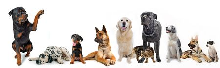 cute  rottweiler say hello with his paw to a group of dogs and cat Stock Photo - 7026059