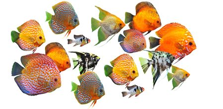 group of fishes on a white background Stock Photo - 7307567