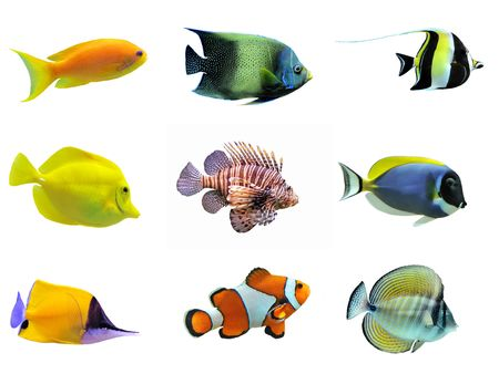 fish water: group of fishes on a white background Stock Photo