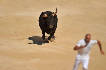 gente corriendo: Toro furioso en el escenario de la corrida de toros que ejecutan cerca de un hombre