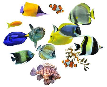 fish tank: Grupo de peces sobre un fondo blanco