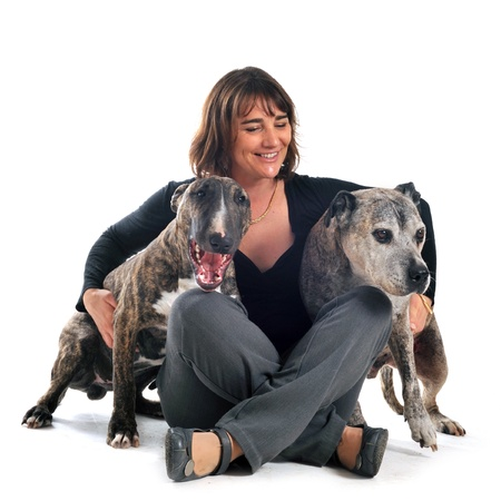 woman with american staffordshire terrier and bull terrier in front of white background photo