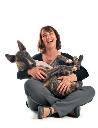pitbull: portrait of a purebred brown bull terrier and laughing woman in front of white background