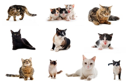 cats and kitten on a white background Stock Photo - 8470623