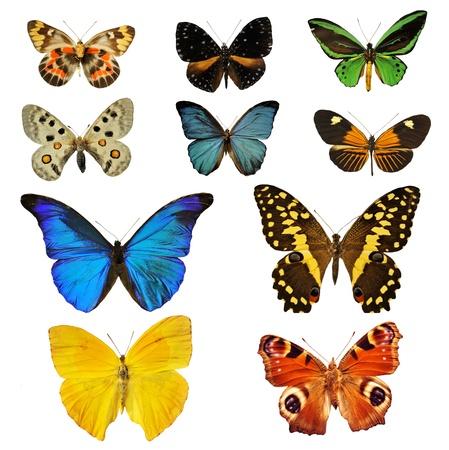 mariposas amarillas: colorfull hermosa mariposa de fondo blanco