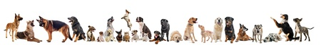 group of dogs, puppies and cats on a white background photo