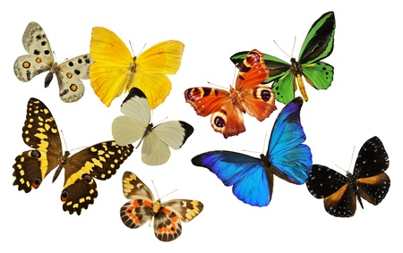 group of  butterfly in front of white background photo