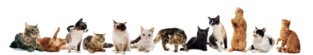 cats: gatti e kitten su uno sfondo bianco Archivio Fotografico