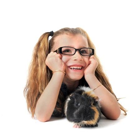świnka morska: Portret laughing little girl i Å›winka z przodu biaÅ'e tÅ'o