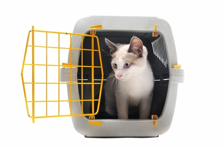 cat closed inside pet carrier isolated on white background photo
