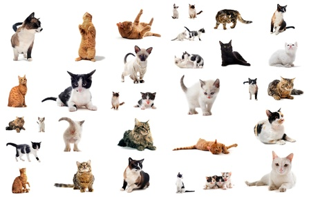 cats and kitten on a white background Stock Photo - 10134857