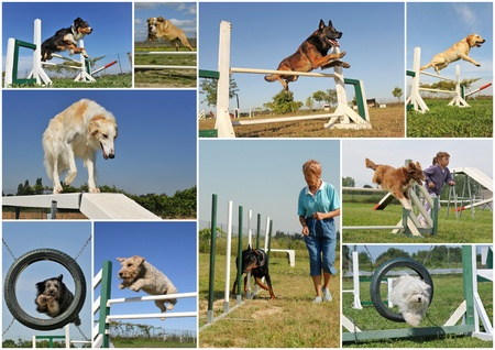 agility people: composite picture with purebred dogs in training of agility