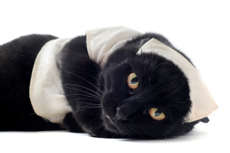 black cat with a habit of doctor in front of white background photo