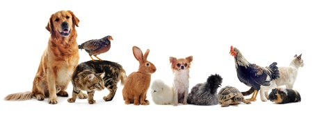 dog cat: group of pet in front of a white background Stock Photo