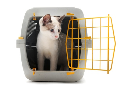 cat carrier: cat closed inside pet carrier isolated on white background Stock Photo