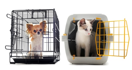 chihuahua and cat closed inside pet carrier isolated on white background photo
