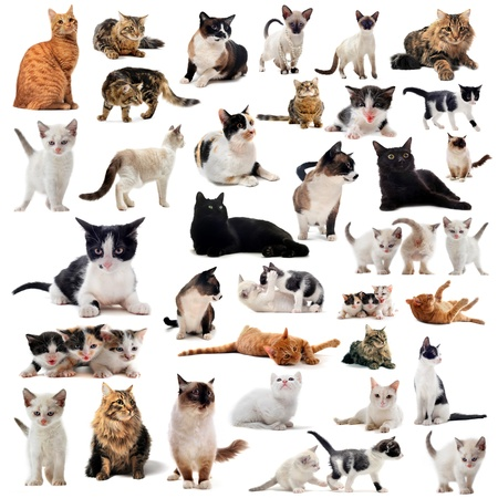 cats and kitten on a white background photo