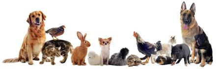 chiot et chaton: un groupe de animal devant un fond blanc