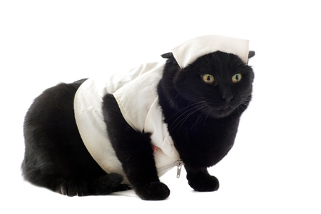 disguised: black cat with a habit of doctor in front of white background Stock Photo