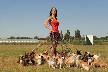 chihuahua pup: portrait of a woman and a large group of chihuahuas
