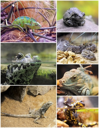 amphibians: pictures of reptiles and amphibians in terrariums