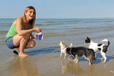 portrait of a cute purebred  chihuahuas and young woman on the beach photo