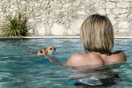 portrait of a cute purebred  chihuahua and young woman in the swimming pool photo