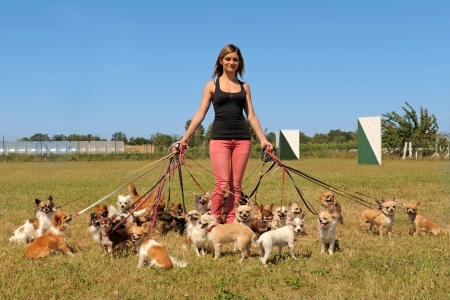 dog leashes: portrait of a woman and a large group of chihuahuas