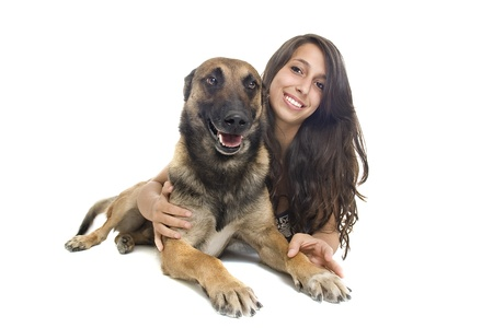 purebred belgian sheepdog malinois with young girl on a white background photo