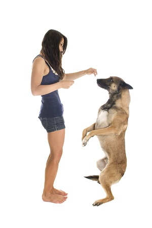 upright: purebred belgian sheepdog malinois and girl on a white background