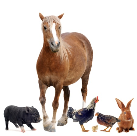 black and white farm: group of farm animals in front of white background Stock Photo