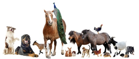 groep van landbouwhuisdieren in de voorkant van een witte achtergrond Stockfoto